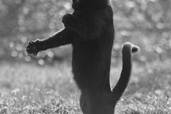 cat_winchun